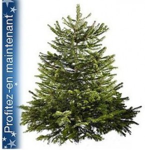 bon plan sapin de Noel 2013 Castorama