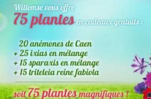 75 plantes gratuites Willemse