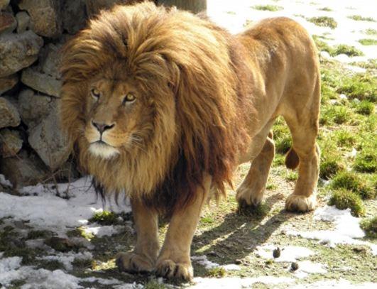 entrées pas chères pour le Parc zoologique des Monts du Livradois