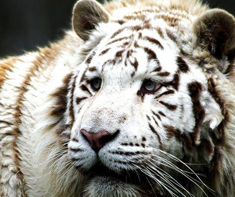 Parc zoologique des Monts du Livradois