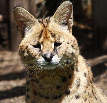 l'entrée enfant au zoo des Monts du Livradois
