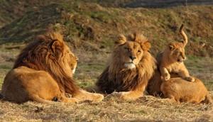 Parc Zoologique des Felins a prix reduit