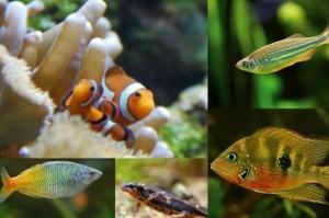 billet moins cher pour l'aquarium de Bruxelles