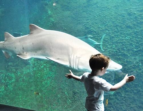 Aquarium Nausicaa de Boulogne sur Mer pas cher