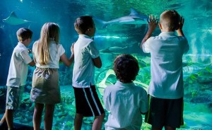 Entree Aquarium SEA LIFE Paris moins chere