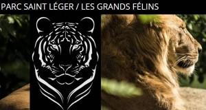 Parc de Saint-Léger Les Grands Félins