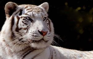 Touroparc Zoo pas cher