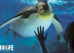 Entrée Aquarium SEA LIFE Paris moins chère