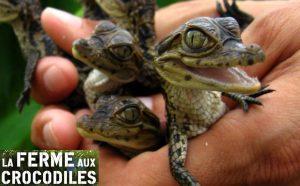 Billet d'entrée Parc La Ferme aux Crocodiles pas cher
