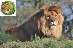 Parc Zoologique de Fréjus pas cher