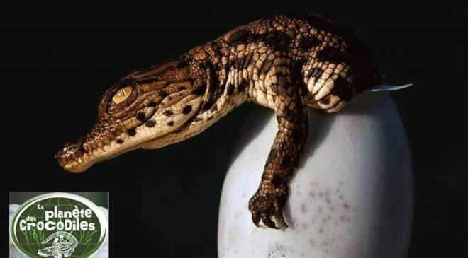 Billet La Planete des Crocodiles pas cher