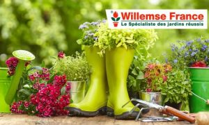 Bon de réduction Willemse