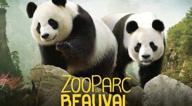 ZooParc de Beauval pas cher