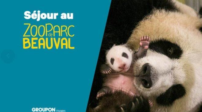 Bon plan Séjour ZooParc de Beauval