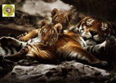Zoo-Fauverie du Mont Faron pas cher