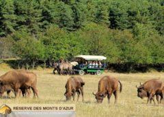 Safari dans la réserve Biologique des Monts d'Azur pas cher