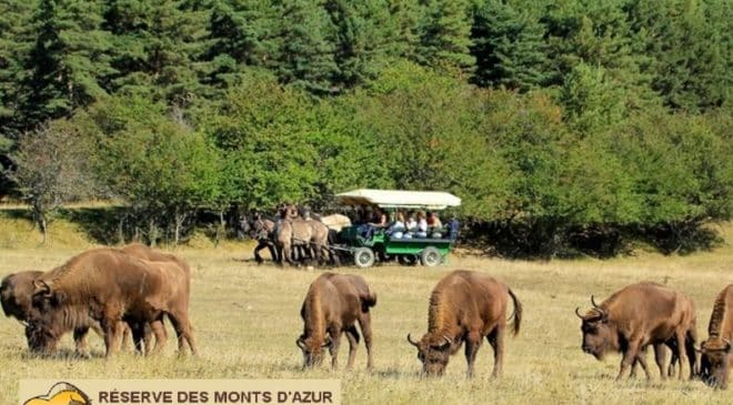 Safari dans la réserve Biologique des Monts D'Azur moins cher : à partir de 8 €