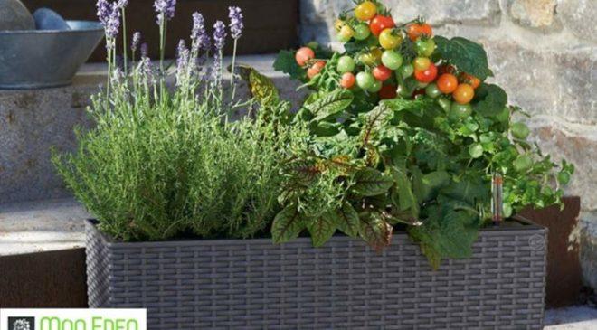 Bon d'achat jardinerie en ligne Mon Eden