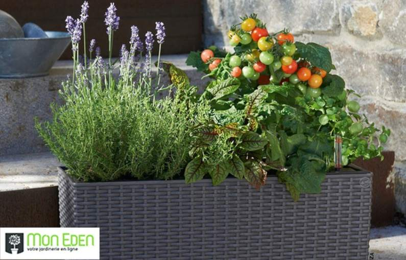 Bon d achat jardinerie en ligne mon eden 40 d achat au for Jardinerie en ligne