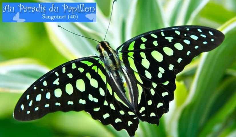 Paradis du Papillon moitié prix