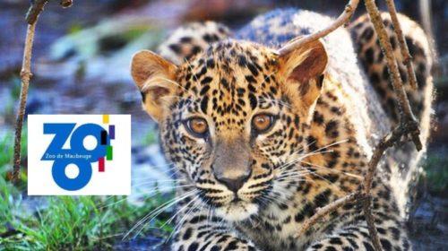 Zoo de Maubeuge pour pas cher