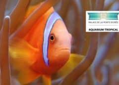 Aquarium Palais de la Porte Dorée pas cher
