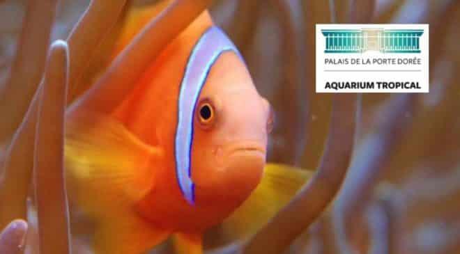 Aquarium Palais de la Porte Dorée pas cher : 5€ le billet d'entrée, 11€ famille…