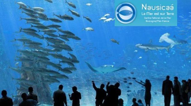 Entree pour l'Aquarium Nausicaa pas cher