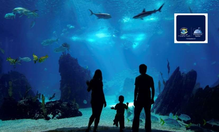 Aquarium Mare Nostrum pas cher