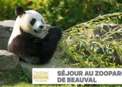 Bon Plan Séjour Zooparc De Beauval Entrée + Nuit Les Pagodes De Beauval