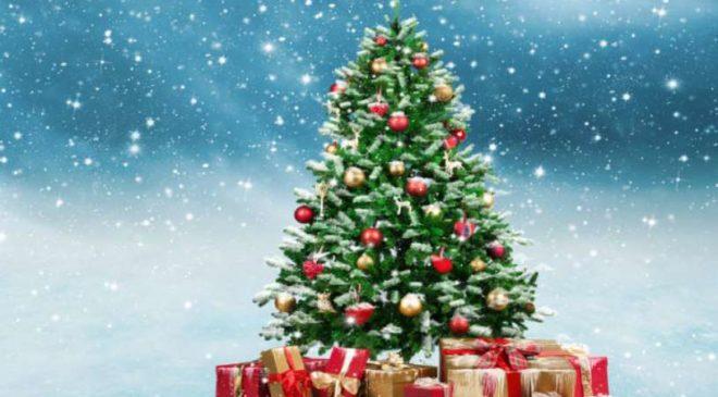 Tous les bons plans Sapin de Noël