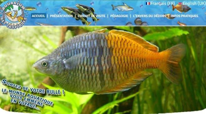 Aquarium des Tropiques pas cher (Allex – Drome)