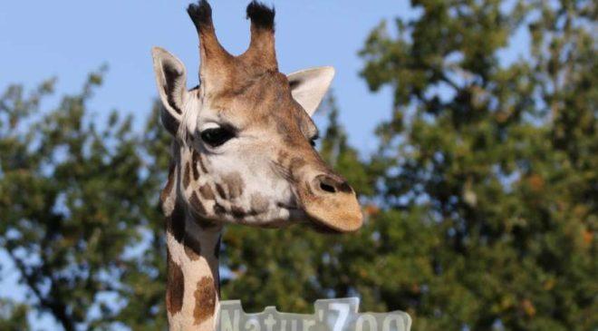 Natur'Zoo de Mervent moins cher