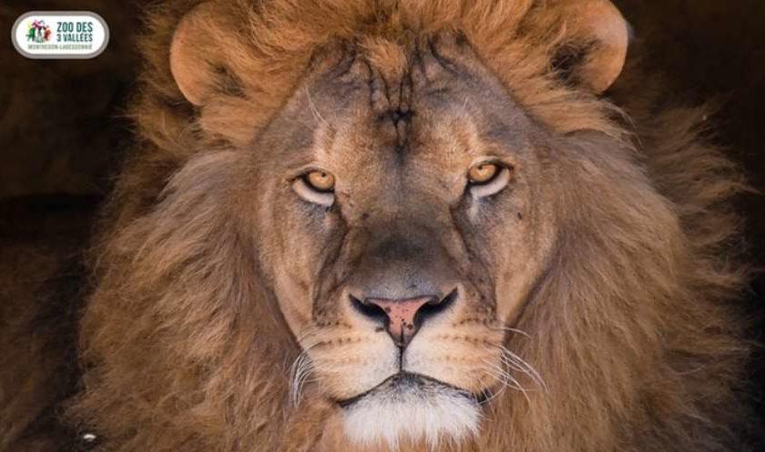 Zoo des 3 Vallées moins cher
