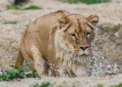 Enquête pour enfant au zoo du parc de la Tête d'Or de Lyon