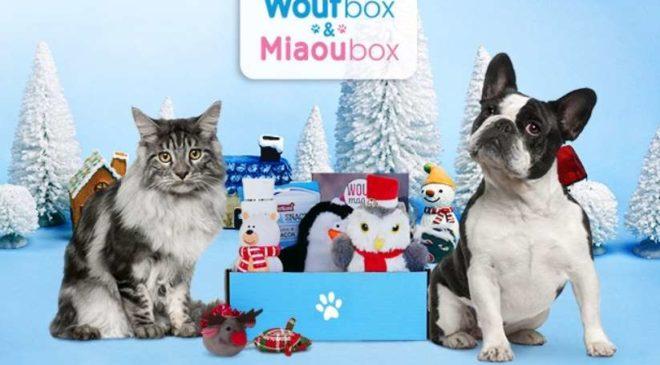 Animal box de Noel (Miaou box - Wouf box) moitié prix