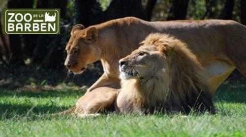 Billet Zoo de la Barben moins cher
