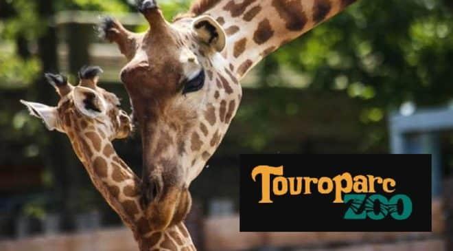 Une journée à Touroparc pour pas cher