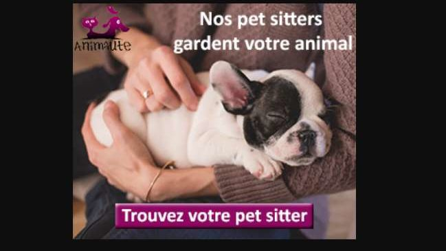 Animaute la plateforme pour la garde d'animaux, promenades ou visites d'animaux