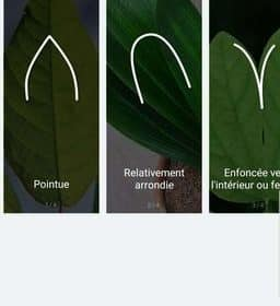 reconnaissance des feuilles Flower Care Plant Monitor Bluetooth Vistefly