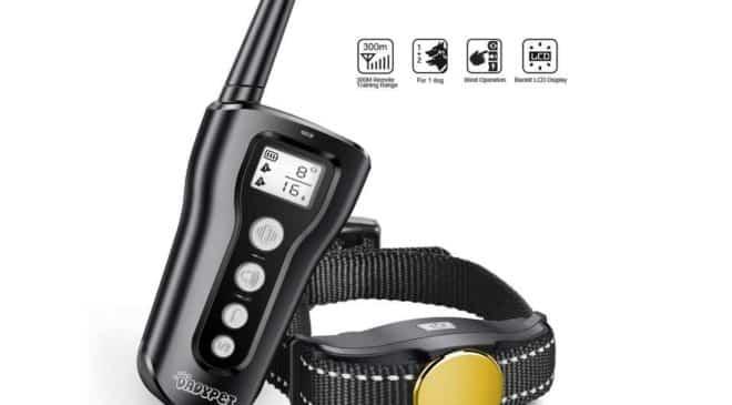 collier de dressage de chien anti-aboiement avec télécommande Dadypet