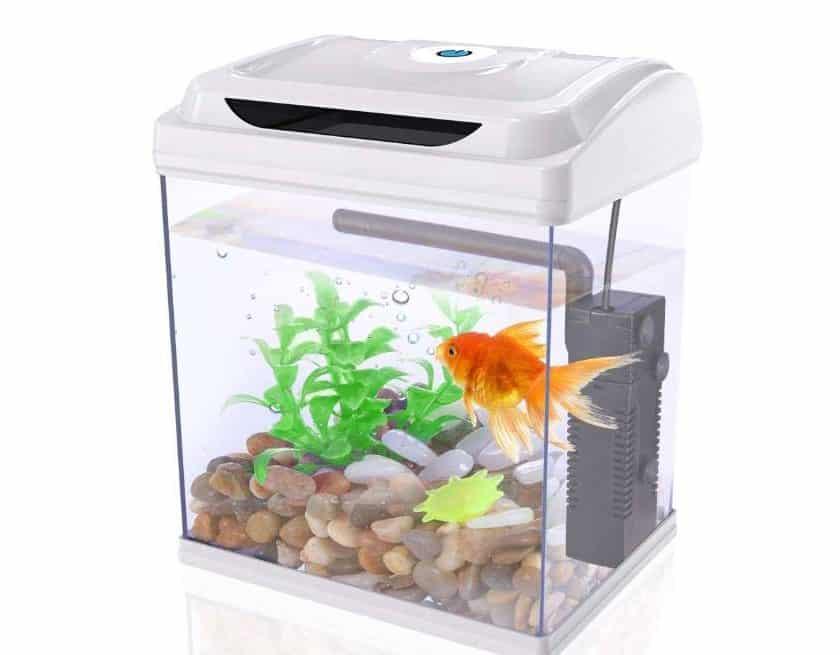 petit aquarium complet Dadypet pas cher