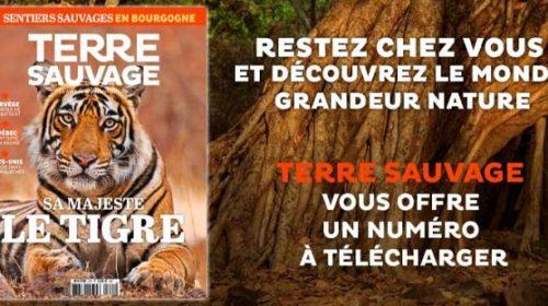 Téléchargez Gratuitement Un Numéro Du Magazine Terre Sauvage