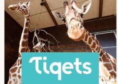remise sur les billets d'entrée zoos & aquariums dans le monde avec tiqets